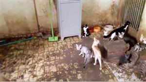 Polícia vai à casa de acumuladora de animais e registra cenas assustadoras