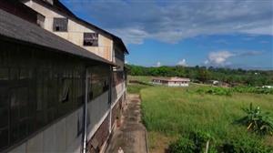 Assista à íntegra do Documento Verdade sobre a cidade de 'Fordlândia'