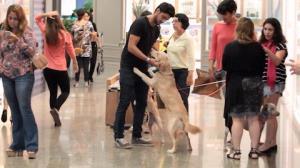 Rodrigo Simas para shopping ao brincar com cachorros
