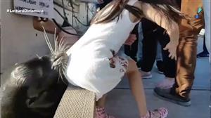 Leão-marinho dá susto ao puxar criança para dentro da água no Canadá