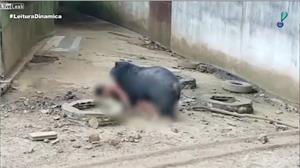 Homem cai em fosso de zoo tailandês e quase é devorado por urso