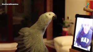 Papagaio impressiona ao identificar objetos em tela de tablet