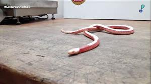 Fiscais apreendem cobras e lagartos em bagagem no aeroporto de Guarulhos