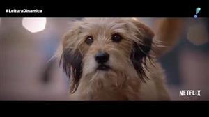 Cãozinho Benji volta em refilmagem 44 anos depois do lançamento