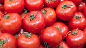 Preços baixos fazem agricultores jogarem tomate no lixo