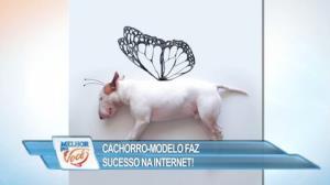 Cachorro vira modelo e faz sucesso na internet