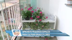 Aprenda a cultivar ervas e flores em pequenos espaços