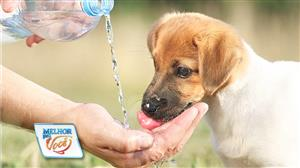 Veterinária dá dicas para refrescar os pets no calor