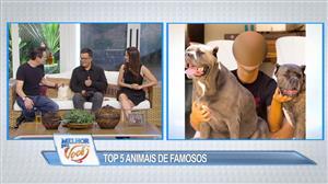 Fofura: veja o top 5 de animais de estimação de celebridades