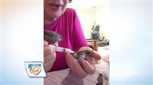 Dona de casa alimenta passarinhos com seringa e vira hit