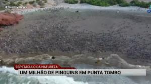 Mais de um milhão de pinguins estão em Punta Tombo, na Argentina
