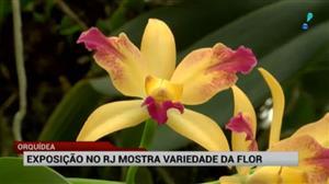 Exposição de orquídeas no RJ mostra variedade da flor