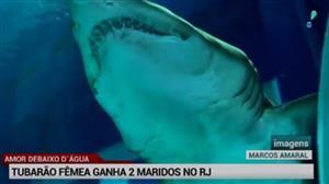 """Aquário do Rio ganha novos tubarões """"estrangeiros"""""""