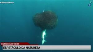 Fotógrafa registra espetáculo no fundo do mar