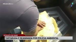 Tartaruga é reanimada por polícia ambiental no litoral de SP