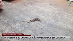 18 cobras e 12 lagartos são apreendidos em Cumbica