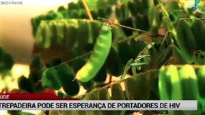 Planta brasileira pode ser esperança para portadores de HIV