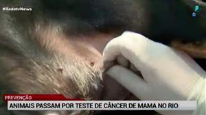 Universidade do Rio cria força-tarefa para evitar câncer de mama em cães