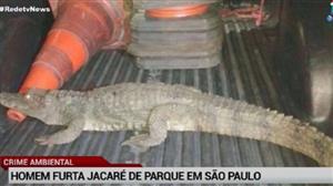 Homem furta jacaré de parque em São Paulo