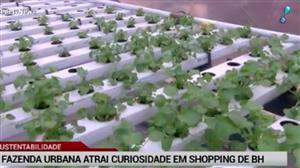 'Fazenda urbana' atrai visitantes em shopping de Belo Horizonte