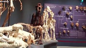 Exposição em Vitória (ES) reúne curiosidades científicas
