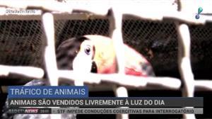 Espécies brasileiras são principal alvo do tráfico de animais silvestres