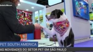 Feira em São Paulo apresenta as maiores novidades do setor pet
