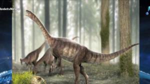 Cientistas encontram fósseis dos mais antigos dinossauros de pescoço longo