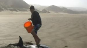 Voluntários salvam seis baleias em praia da Nova Zelândia