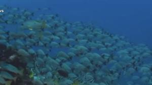 Lixo no mar: Os oceanos poderão ter mais plástico do que peixes até 2050