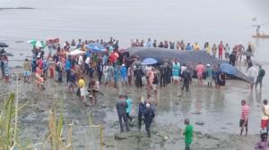Baleia jubarte morre após passar horas encalhada em praia em Salvador