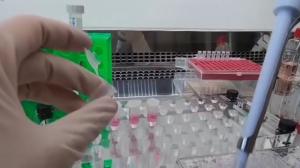 Covid-19: Governo de SP quer aumentar número de doses produzidas de vacina