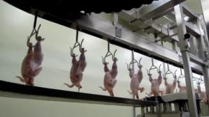 Hong Kong voltou a poder comprar carne de frango brasileira