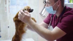 Coreia do Sul adota distanciamento social para animais de estimação
