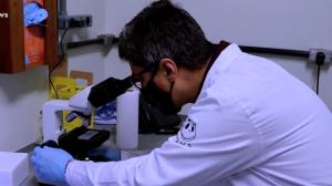 Veneno de cobra pode ajudar a combater a covid-19