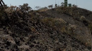 Bombeiros combatem incêndios em parques