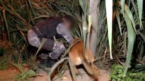 Cães policiais sobem morro a caça de traficantes em Vitória