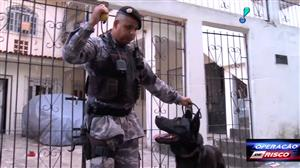 Cão da polícia encontra cocaína no meio de escombros em comunidade