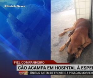 Cão acampa em hospital à espera do dono em Limeira (SP)