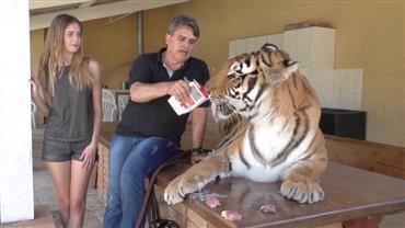 """Modelos do """"Conexão Models"""" ficam cara a cara com tigre"""