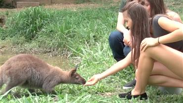 Modelos encaram o desafio de alimentar pequenos cangurus em um zoológico