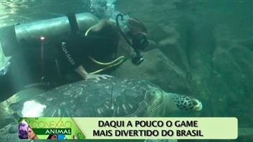Modelo mergulha com tubarões no Aquário do Guarujá