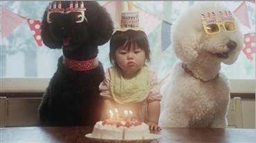 Beck divulga clipe com mini celebridade japonesa e seus três poodles