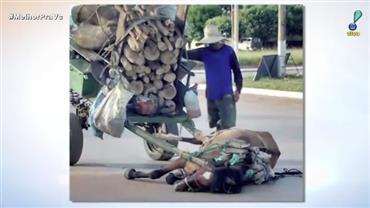 Cavalo desmaia por puxar carroça muito pesada
