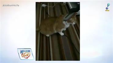 Descubra quem é a famosa que limpou o gato com aspirador de pó