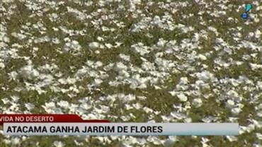Deserto do Atacama ganha jardim de flores