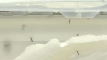 Recife enfrenta alta de casos de Dengue, Zika e Chicungunya