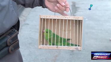 Homens são autuados por tráfico de animais em feira de rolo
