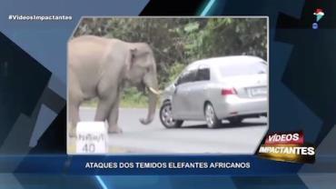 Elefantes africanos causam pânico após atacar veículos em rodovia