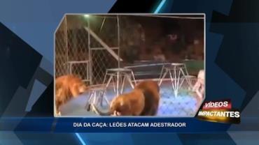 Leão ataca adestrador durante apresentação no circo